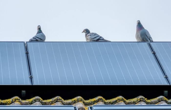 how to stop pigeons nesting under solar panels