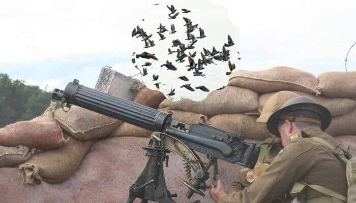 how many pigeons died in ww1