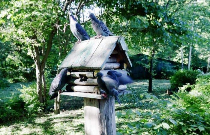 how to keep pigeons away from your bird feeder