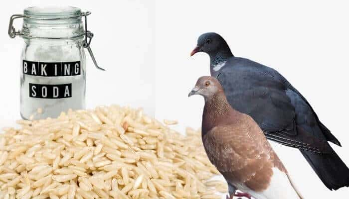 two pigeons with baking soda and rice
