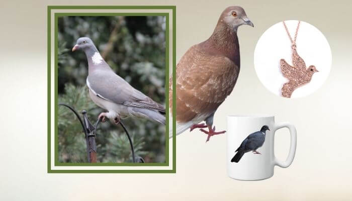 gifts for pigeon lovers