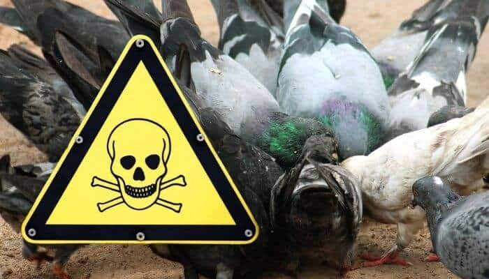pigeon poisons