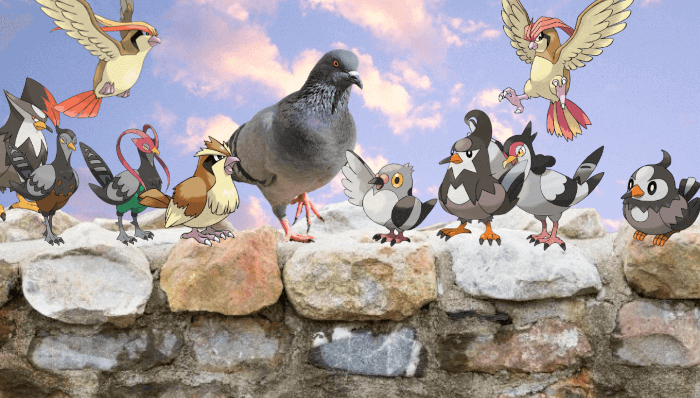 pokemon pigeons