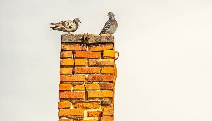 How Long for a Bird Stuck in a Chimney to Die
