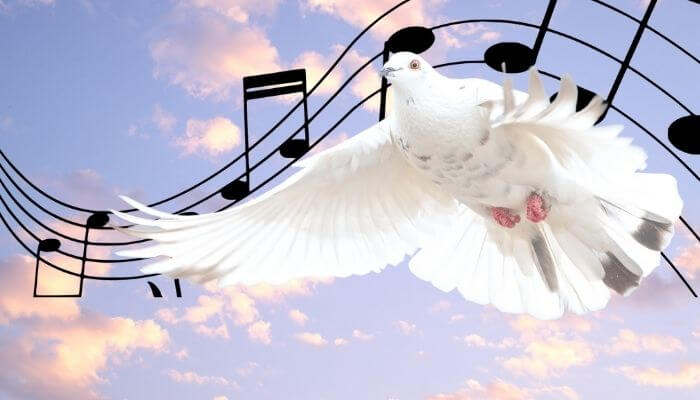 do doves sing