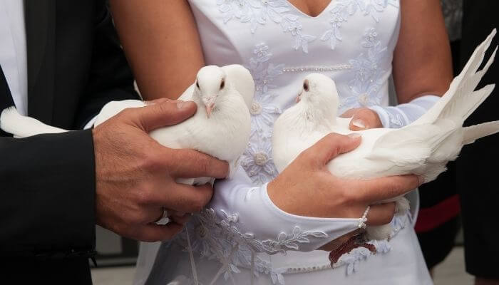 dove releases are common at weddings
