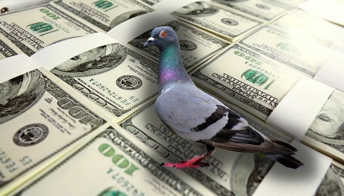 most expensive pigeon in the world