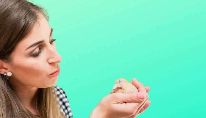pigeon friendly rescue centres