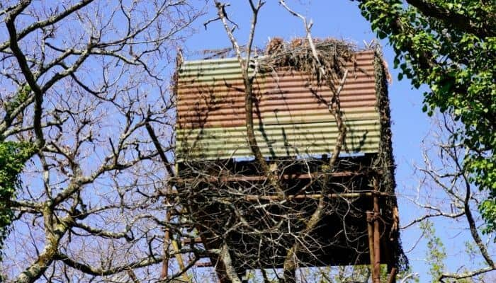 a pigeon hunting hideout