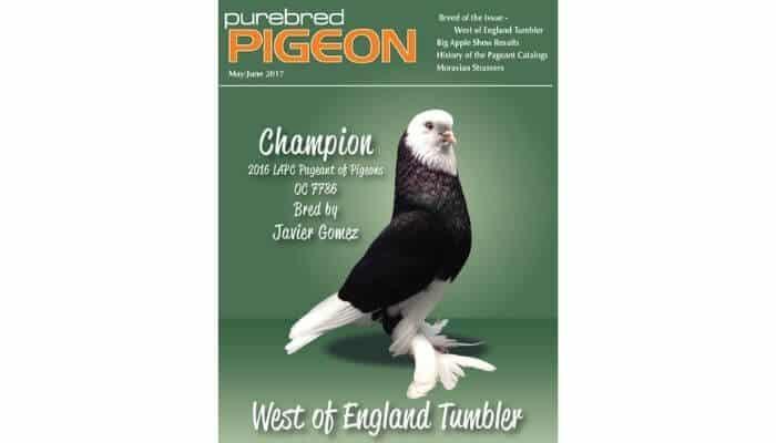 pure bred pigeon magazine